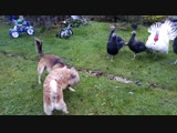 Фанаты собачьих боёв
