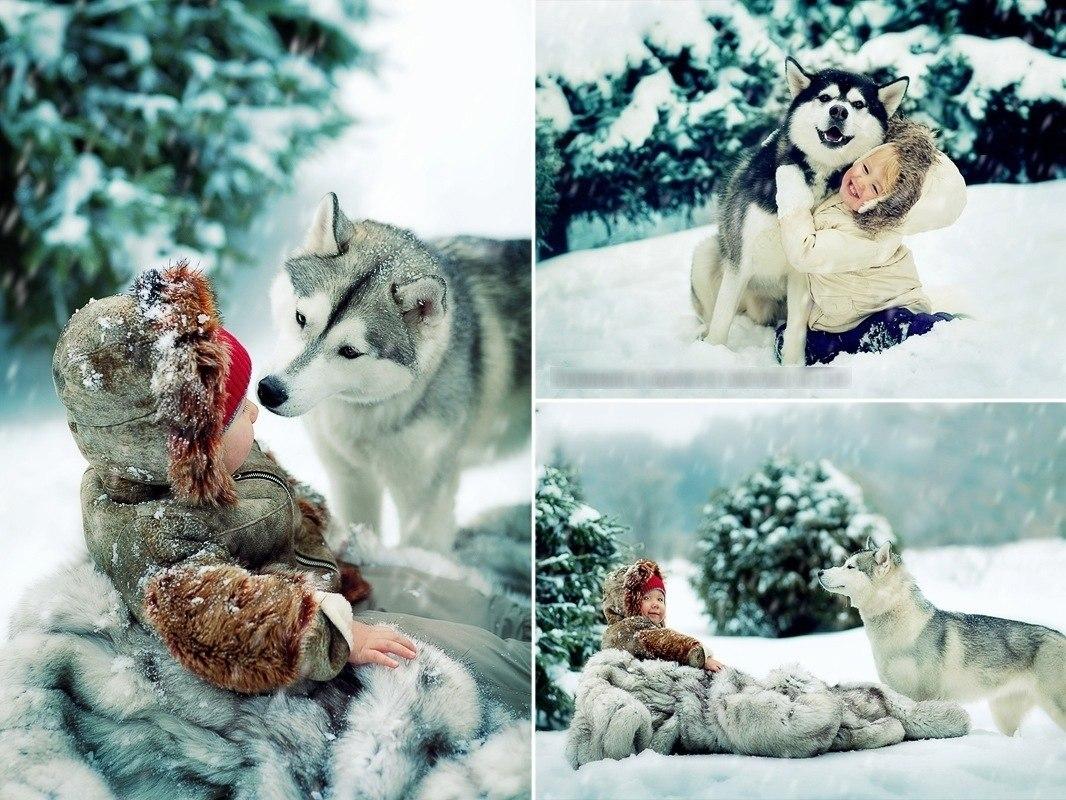 *°•.Животные.•°*