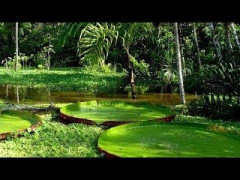 Дикая природа. Джунгли - тропический лес. Центральная Америка. Документальный фильм.