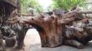 Art root wood hammock swing amazing