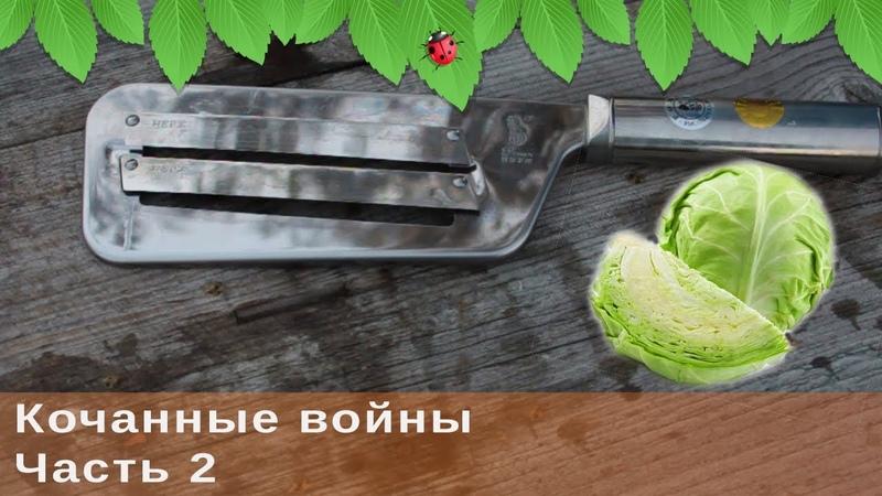 Кочанные войны, ч.2. Заготовка маринованной капусты на зиму.