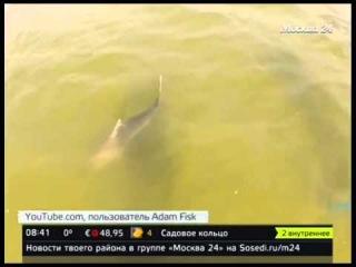 Во Флориде мужчина два часа катался на лодке, которую тащила рыба-молот