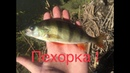 На живца ! Рыбалка на Пехорке в Подмосковье !