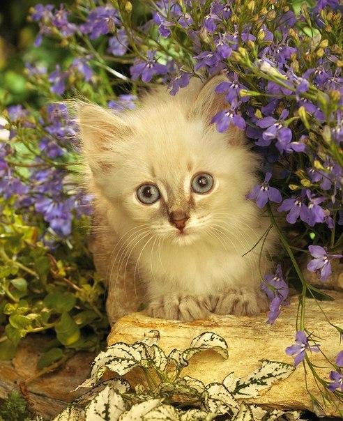 Котята в цветах! 🌸