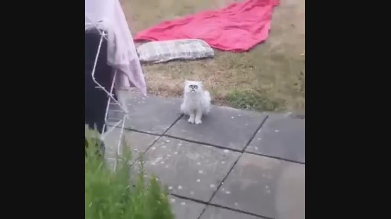 Weird cat don't worry lucy