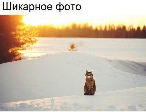 Фото №456256599 со страницы Михаила Каликина