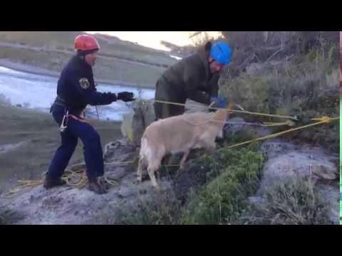 Спасатели выручили коз из горного плена