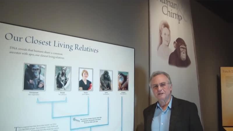 Ричард Докинз - Почему до сих пор есть шимпанзе (обезьяны)