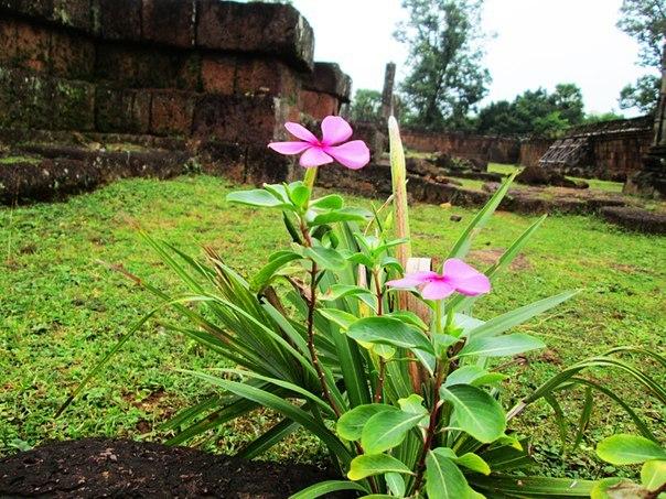 Наш загадочный Ангкор AnIQrRigG8c