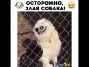 очень злой собак)))