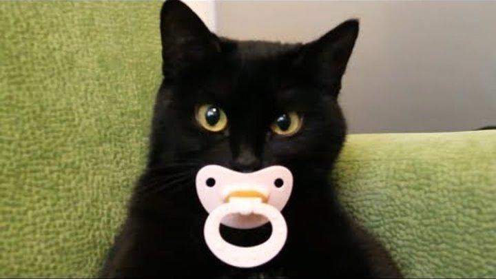 Приколы с кошками и котами 4. Подборка смешных и интересных видео с котиками и кошечками