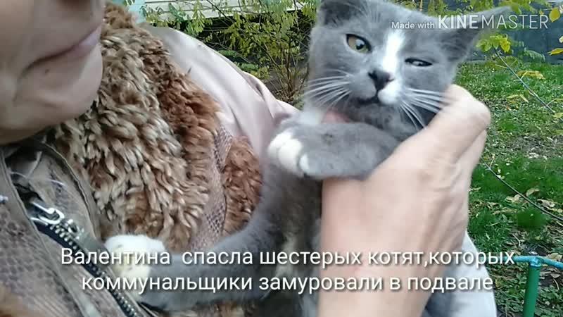 В Слуцке заживо замуровали котят. Две случчанки их спасли