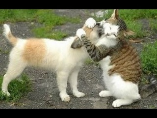 Funny Cats Meeting Cute Puppies For The First Time Compilation 2014 [NEW]