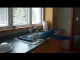 Помощник на кухне))