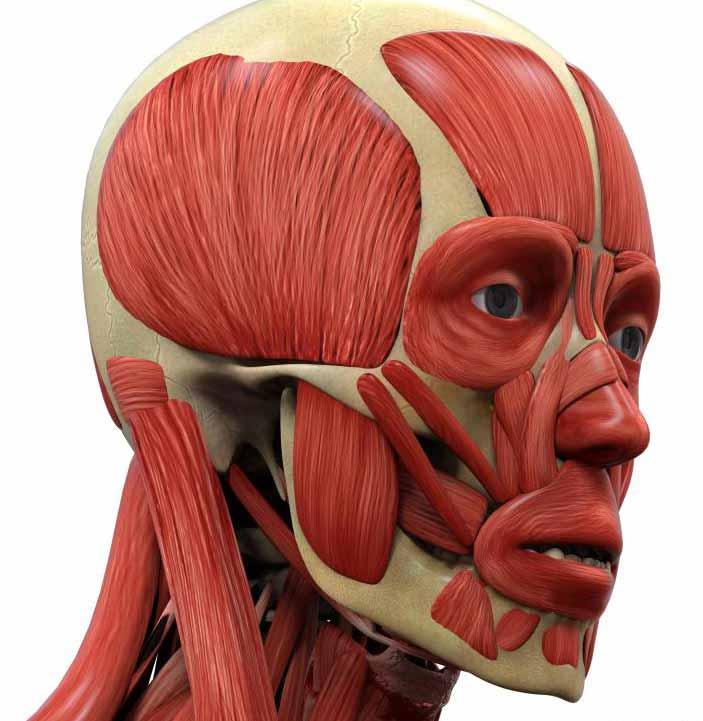 Ритидэктомия - это косметическая операция, которая пытается подтянуть мышцы лица