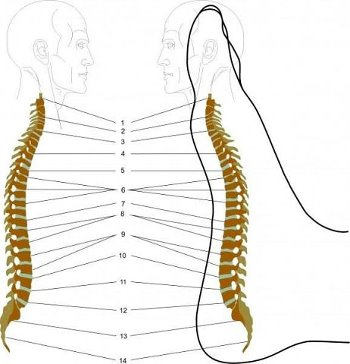 Лечение позвоночника с помощью массажа стоп