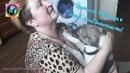 Бездомный щенок обнимает женщину приютившую его а кошка из приюта знакомится с новым домом
