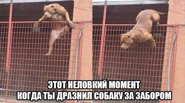 http://cs403824.vk.me/v403824459/6259/dOy5NXllyhQ.jpg
