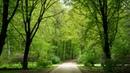 Картинка природа. Тихий зеленый парк, деревья, дорожки, жпг.