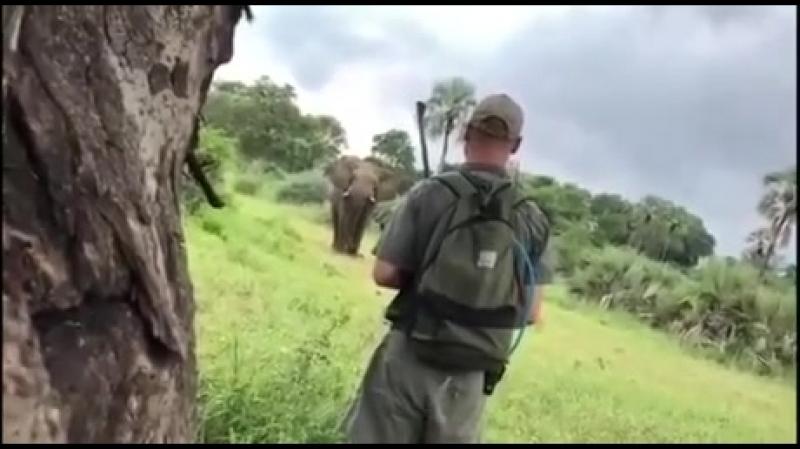Испугал слона.
