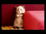 Most Funny Cats Fail Compilation- Try Not To Laugh