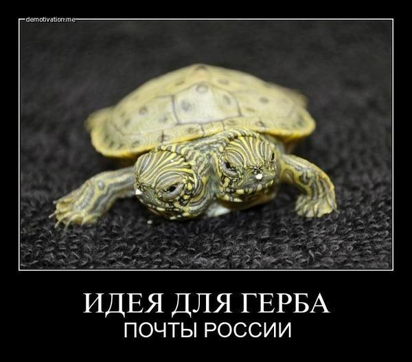 http://cs424126.vk.me/v424126237/5e30/fU9fmc5Gfec.jpg