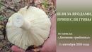 Шли за ягодами принесли грибы Дневник грибника 1 сентября 2018 года