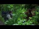 Gorilas en la niebla (Gorillas in the Mist, 1988) Michael Apted