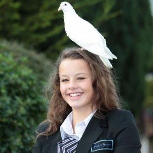 Народные приметы: к чему голубь садится на голову, на руку Нередко люди видят во сне тех или иных птиц. Особенно часто им снится голубь. Несмотря на то, что эта птица символ мира и верности,