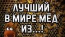 ЛУЧШИЙ В МИРЕ МЁД, ИЗ...! Виталий Островский. Мёд в сотах, прополис, рецепты, мирра, зеленый чай.