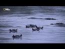 Невероятная Африка. Пробуждение Вирунги  Extraordinary Africa. The Virunga Awakes (2011)