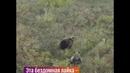 На Камчатке лайка сбежала в лес и подружилась с медведицей