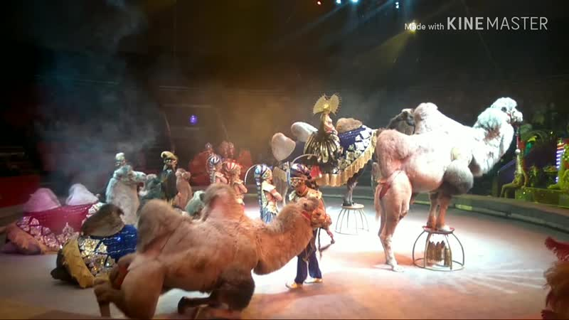 Bryansk ЦиркВыходные 14. 10. 18 🙏💚🎪🎭🎩🎈🎉😻💃✨🎈