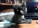 У Аси отходняк ч.1 кошка после наркоза