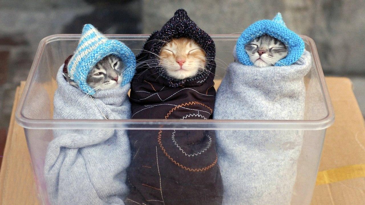 Картинки кошек и котят смешные 1
