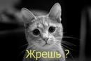 Самый лучший друг - это кот. Он никогда не скажет Почему ты жрешь по ночам? .