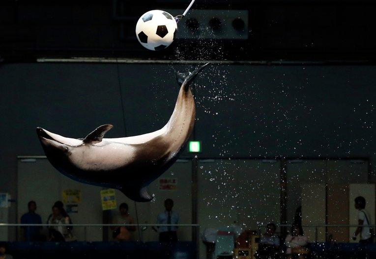 Зверушки. Фото © REUTERS/ Issei Kato