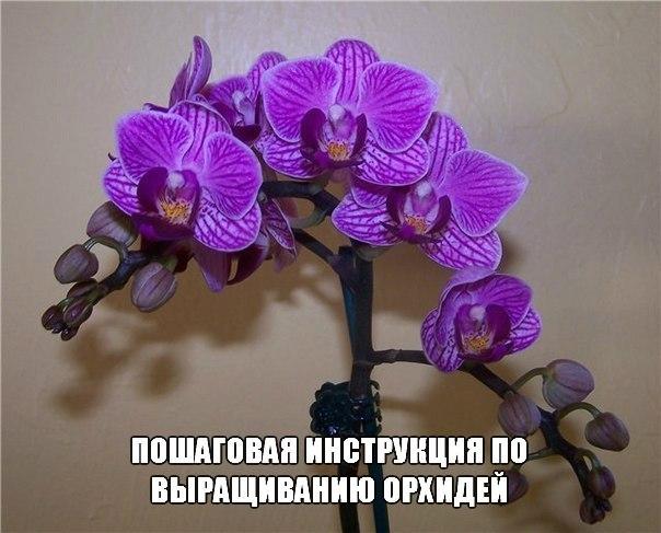 Как заставить орхидею выпустить детку? Как ухаживать Как пересаживать детку, отводок орхидеи Как правильно поливать цветок Орхидея Как выращивают орхидеи Отличный и эффективный способ размножения практически любых видов комнатных и садовых Продолжeниe в источникe