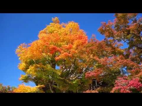 善峯寺の紅葉2018 京都紅葉【4K】Autumn Leaves in Kyoto