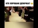 Собачка на свадьбе