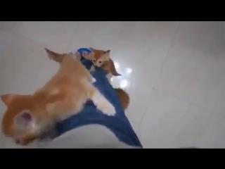 Атака милых котят