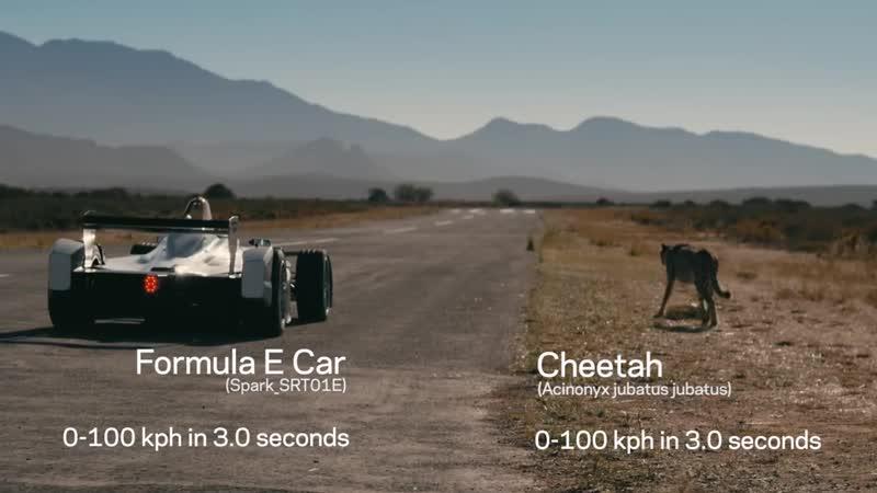 Drag Race_ Formula E Car vs Cheetah