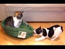 Ускользающая Собака Кровать и Смешные кошки Сборник - NEW HD