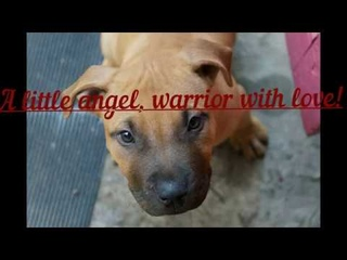 A little angel, warrior with love LOVELY HEARTS