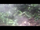Caminata Bosque Eterno De Los Niños
