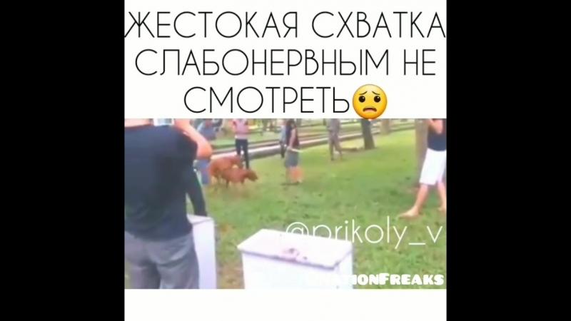 Спустили собак на бой
