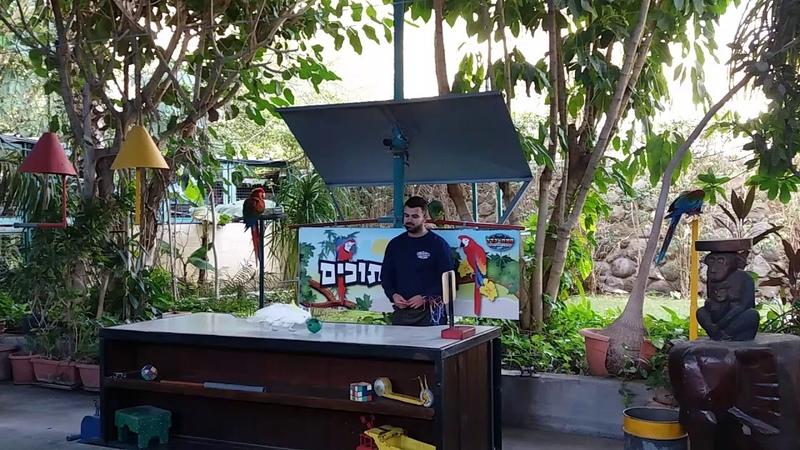 Шоу попугаев в Хамат Гадер