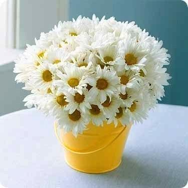 """Хочу проснуться утром, а рядом на подушке лежит букет ромашек и записка: """"Не мучай цветы: любит, не любит.. люблю и очень сильно"""""""