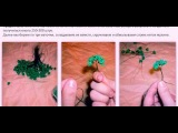 Бисероплетение Дерево бонсай из бисера видео схема