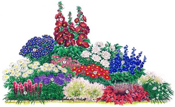 Сад, огород   Записи в рубрике